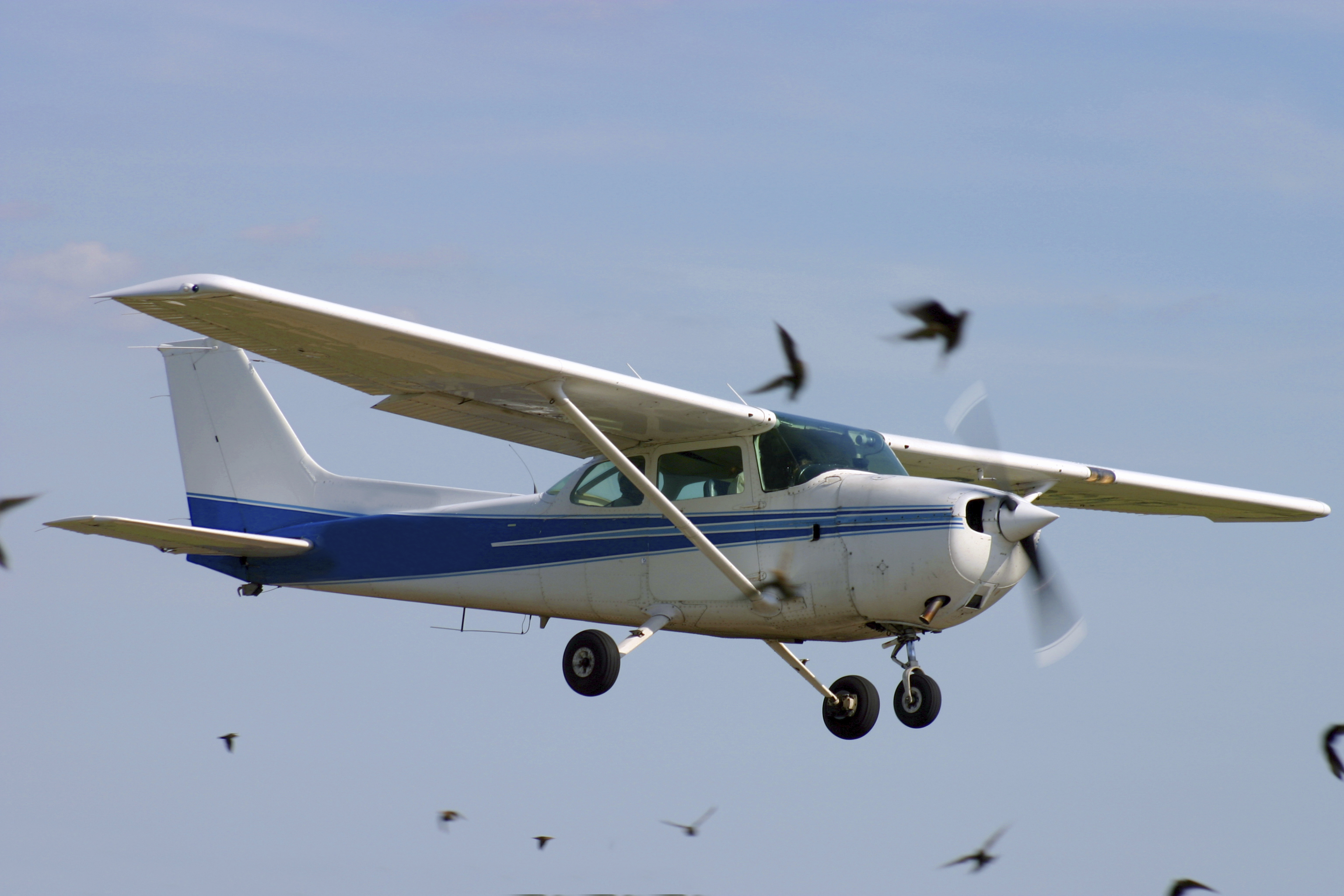 Faa Wildlife Strike Reporting Continues To Increase >> Wildlife Strike Reporting Continues to Increase
